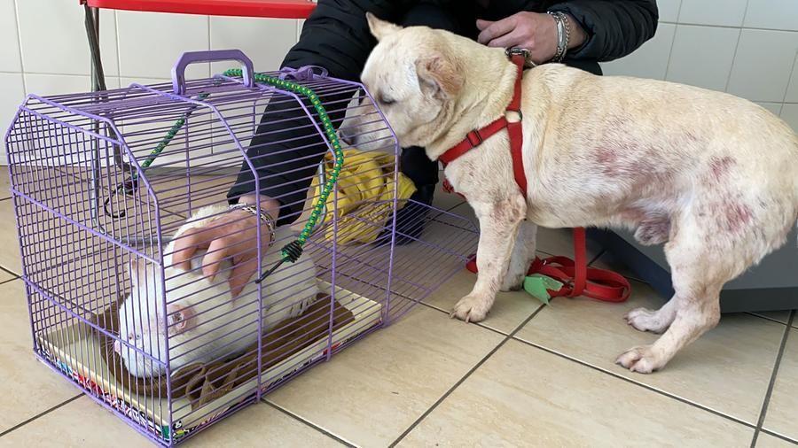 """Cane e gatto abbandonati in un parco di Roma ora cercano casa insieme: """"Sono inseparabili"""""""