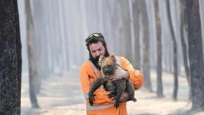 Dramatic WWF report: fires in Australia killed a billion animals