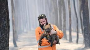 Rapporto drammatico del WWF: gli incendi australiani uccidono 1 miliardo di animali