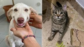 Hola and Misia are adopted, the new life of inseparable puppies of dogs and cats begins with Leko