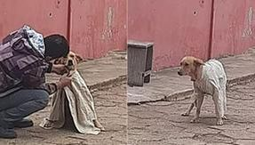 Boy covers the cold stray dog with a shirt: a gesture of affection and love