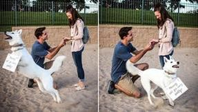 A dog tries to help the owner to do the marriage proposal, but steals the scene