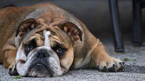 La storia di Prezzemolo, il cane infertile abbandonato perché non più utile