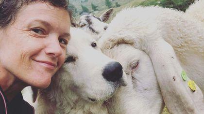 Un selfie con la pecora: il concorso fotografico dei giovani pastori bergamaschi