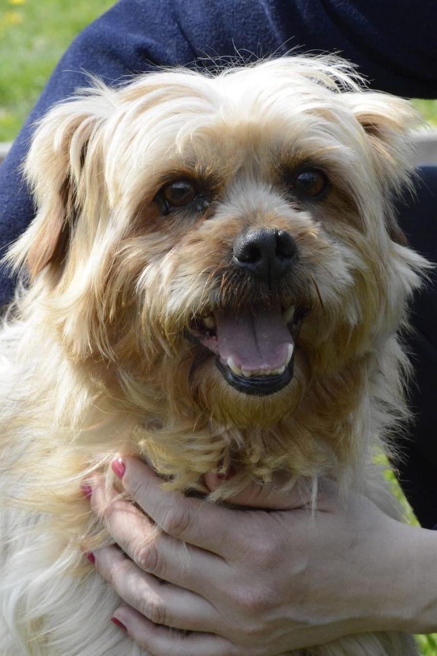 Tennent's ha trovato casa, lieto fine per il cane abbandonato legato a un albero - La Stampa