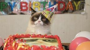 Organizzano un compleanno clandestino per festeggiare un gatto, 15 persone sono infettate dal coronavirus