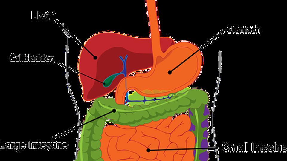 cosa sono i probiotici e i prebiotici come migliorare la mia salute dello stomaco