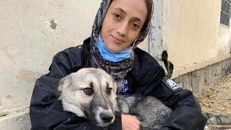 """""""Salvate il mio staff e i cani e gatti dall'inferno di Kabul"""", l'appello di un ex marine inglese rimasto in Afghanistan"""