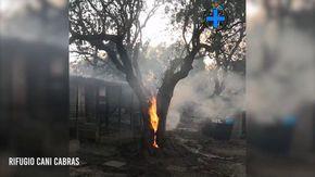 Il miracolo di Cabras: due cani si salvano dalle fiamme nascondendosi dentro un ulivo