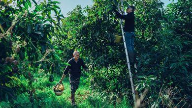 Il caldo in Sicilia è troppo forte: scompaiono le arance e arrivano mango e avocado