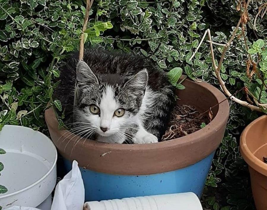 Un gatto fa amicizia con un micio randagio e lo porta a casa come nuovo amico