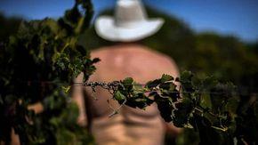 La vendemmia dei nudisti in Portogallo