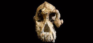 definire fossili datati relativi