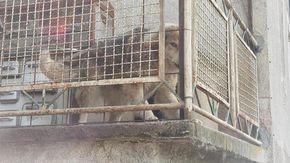 Tengono il cane per due anni sul balcone a Montjovet, l'Usl glielo porta via
