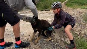 Il cane con la testa incastrata in una bottiglia viene liberato da un gruppo di ciclisti, la sua gioia è incontenibile