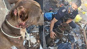 Cane abbandonato legato a un albero rischia di morire per un incendio, salvato dai pompieri