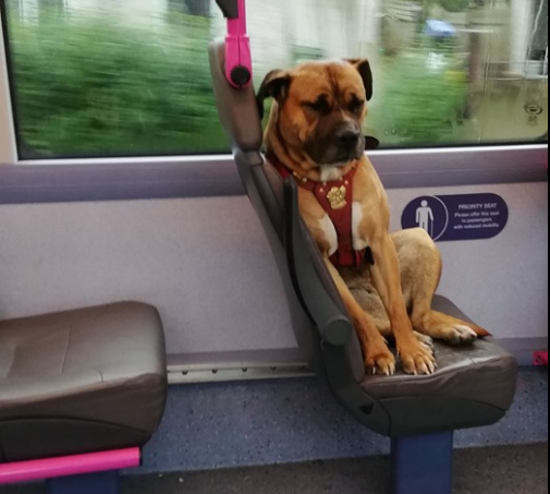 Una cagnolina sale da sola su un bus, la foto sui social la aiuta a trovare una nuova casa