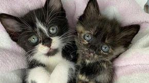 I miagolii di un gatto attirano l'attenzione di un uomo e la sua vita cambia insieme a quella dei suoi fratelli