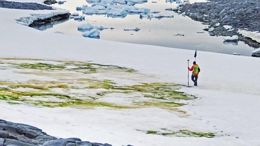 Il mistero della neve verde dell'Antartico che si vede anche dallo spazio
