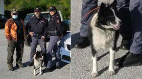 Cane rarissimo viene trovato vagare lungo una strada statale: così Laika è stata salvata dai poliziotti