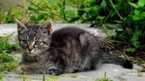 He kicks a cat, sentenced to pay ten thousand euros: he was in the engine compartment of the car, he broke his paw