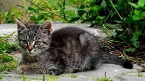 Ha preso a calci un gatto ed è stato condannato a pagare diecimila euro: era nel vano motore, rompendosi una zampa