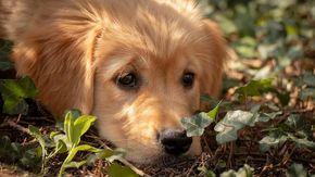 """""""L'anima del mio cane defunto mi ha fatto trovare Priscilla e la mia vita è rinata"""""""