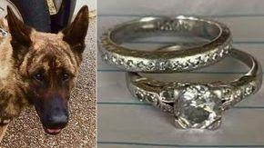 """""""Ha ritrovato i miei anelli nuziali"""". L'impresa speciale di Dogo, il cane addestrato per scovare droga e armi"""
