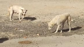 Adopted during the coronavirus emergency, dogs are now returned to kennels or abandoned: the Israel case
