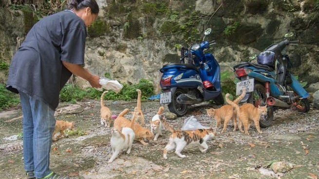 Coronavirus in Thailandia, i cani e gatti di strada di Phuket non muoiono più di fame