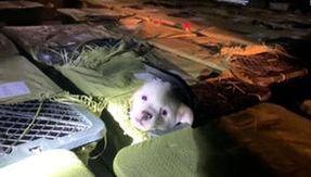 Na China, o horror de engradados misteriosos para animais de estimação: milhares de cães e gatos morrem durante o transporte