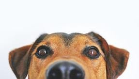 Yes, your dog understands when you are telling him a lie