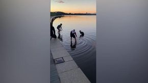 Australia, canguro cade in un lago: due passanti si gettano nelle acque gelide e lo salvano