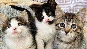 """Una famiglia adotta tre gatti che non si volevano separare """"perché hanno un legame speciale"""""""