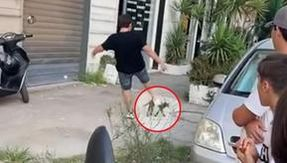 In Casoria a boy kicks a cat in the street, the video ends up on social media: two minors reported
