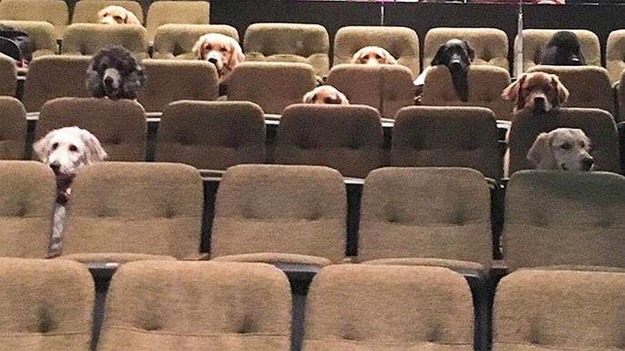 I cani guida vanno a teatro: ecco come s'imparano le buone maniere prima di entrare in servizio