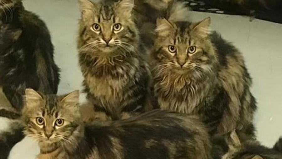 Roma, muore un'anziana. In casa sua trovano settanta gatti in condizioni drammatiche. Ora cercano un'adozione