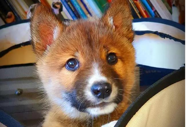 Un cucciolo cade dal cielo in un giardino e serve il test del dna per capire che animale sia
