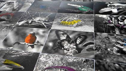Capri, l'arte si fa inchiesta: alla Certosa una mostra sui cambiamenti climatici