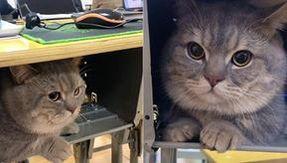 Ba Dun, il gatto che non vuole stare a casa da solo e l'allievo lo nasconde sotto il banco dell'aula