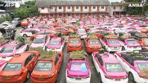 Bangkok, il cimitero dei taxi prende vita grazie ad orti e stagni per le rane