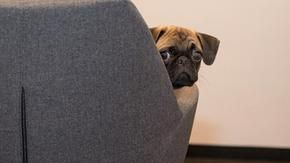 Animals in the office, go-ahead at the University of Verona to reduce employee stress in post-confinement
