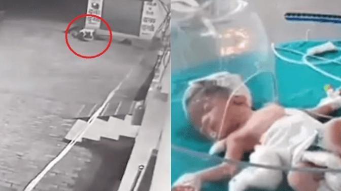 Gettata nella fognatura, una neonata viene salvata dai cani randagi