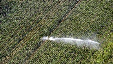 L'agricoltura europea non vuole essere verde