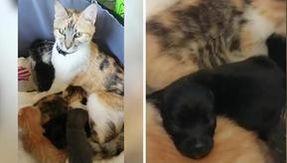 A doce história da gatinha da mãe Alita que adotou dois cães órfãos
