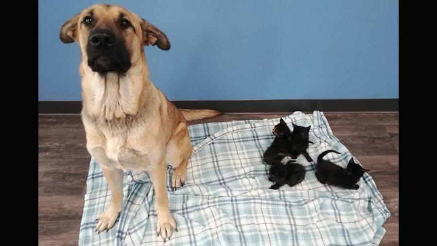 Cane randagio salva cinque gattini tenendoli al caldo con il suo corpo in mezzo alla neve