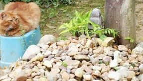 For two years, a red cat has been visiting the grave of its dead owner every day