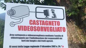 Il caso dei ladri di funghi e castagne: per fermarli ora ci sono le videotrappole