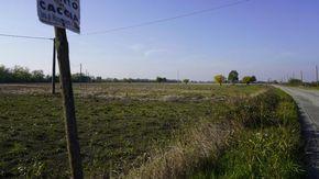 """A Castelspina la risaia """"in asciutta"""" della famiglia Guglielmero su 90 ettari di terreno"""