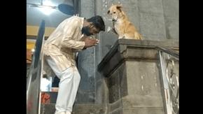 Fuori da un tempio indiano, c'è un cane che benedice i devoti ogni giorno